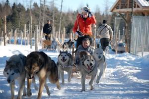 Dog Racing Quebec